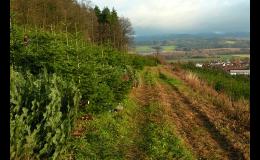 Prodej řezaných živých vánočních stromků Rožnov pod Radhoštěm
