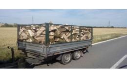 Palivové dřevo, Háj ve Slezsku