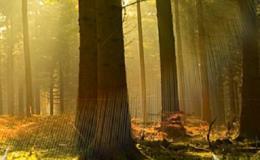 Kácení a ořež stromů