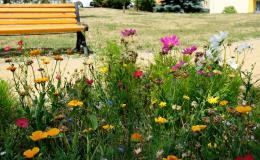 Výsadba květinových záhonů