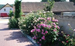 Pro okrasné květiny si přijďte k nám do Želešic