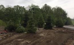 Výsadba stromů a keřů Frýdek-Místek