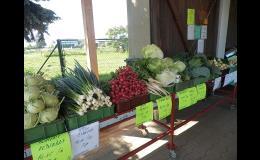 Pěstování a prodej zeleniny Kupařovice