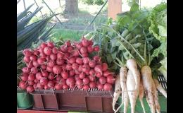 Prodej čerstvé zeleniny přímo z pole Kupařovice