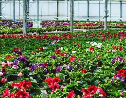 Zahradnické produkty