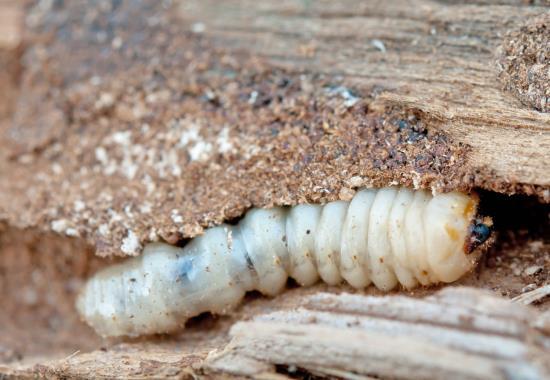 Přípravky Bochemit k likvidaci škůdců dřeva a proti plísním