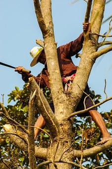 Kácení stromů pomocí stomolezecké techniky