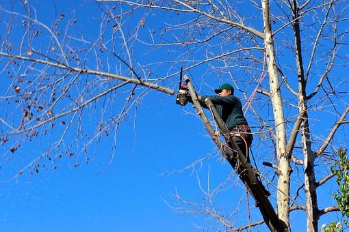 Volné kácení, kácení stromů s přetažením, kácení postupné