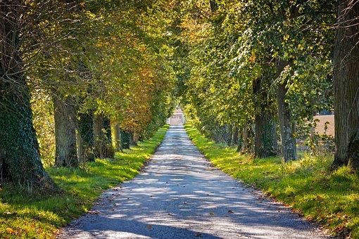 ArboKohout nabízí hodnocení stavu stromů