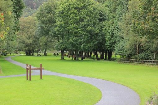 Péče o památné stromy - ArboKohout Vysočina