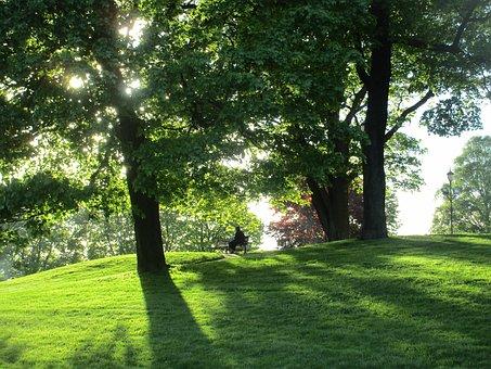 Péče o živé ploty, keře, stromy - výsadba, ořezy, kácení