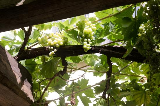 Rodinné vinařství Víno Šimák v Mikulově