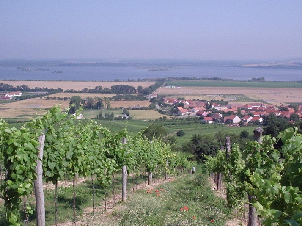 Ochutnávka bílých a červených vín z mikulovské podoblasti