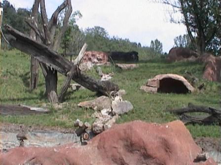 Imitace skalních masivů Torkret v prostorách zoologické zahrady