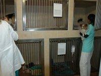 Očkování zvířat, diagnostika, zákroky, inhalační anestezie