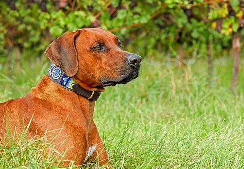 Antiparazitní obojky pro psy a kočky