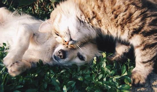 Zdravotní pojištění PetExpert pro zvířata