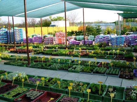 Zdravé rostliny, trvalky a letničky na Břeclavsku