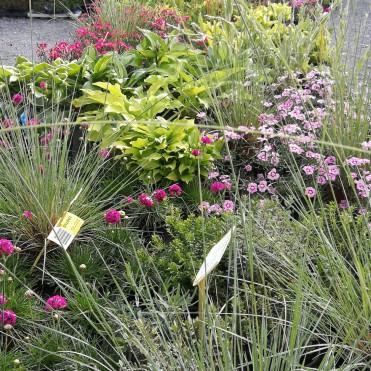 Okrášlete zahradu sezónní květinou