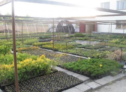 Pěstovnání lesních sazenic ve skleníku - Kelč, Vsetínsko