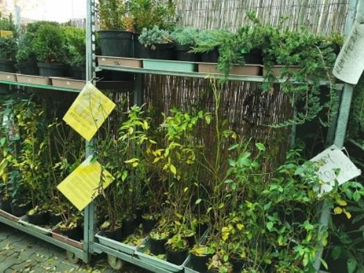 Zahradnictví Zelená zahrada Znojmo