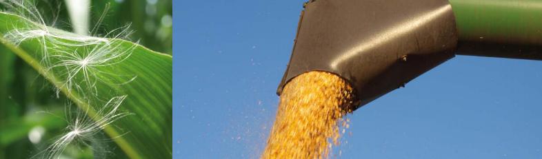 Produkty s vyváženými vlastnostmi nabízí společnost VP AGRO, spol. s r.o.