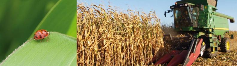 Kukuřice a řepka pro zemědělské účely nabízí společnost VP AGRO, spol. s r.o.
