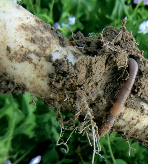 Pěstební technologie TerraLife od VP AGRO, spol. s r.o. zlepšují mimo jiné i vlastnosti půdy.