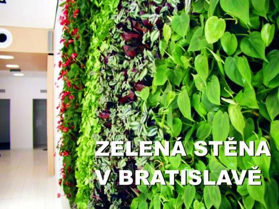 Zelená vegetativní stěna - Matouš Hydroponie s.r.o.