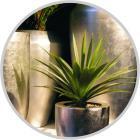 Hydroponicky pěstované pokojové rostliny