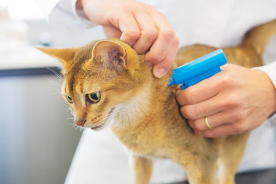 Doplňkové veterinární služby, čipování, pasy a prodej zvířecích krmiv