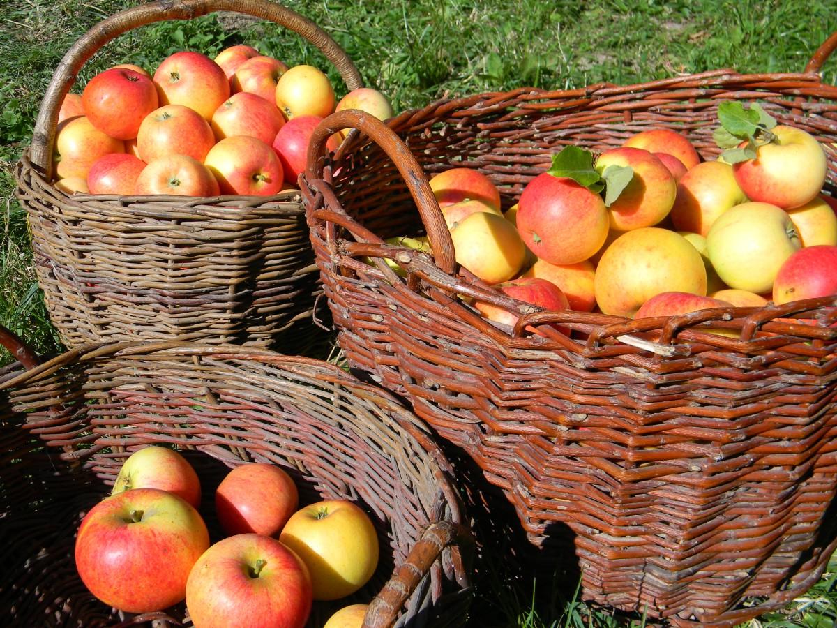 Ekologické pěstování ovoce a zeleniny, Mutišov, jižní Čechy