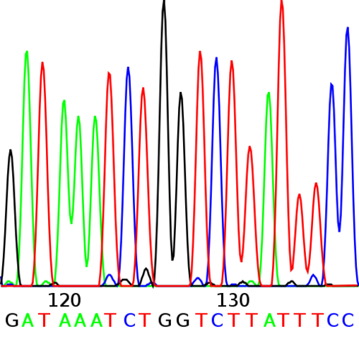 Sekvenace DNA - rychlost, přesnost a výsledky v elektronické podobě
