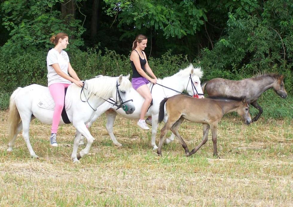 Vyjížďky na koních v malebné krajině vinic na Znojemsku