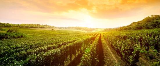 ZAMMA-SUDY s.r.o. ve Vojkovicích nabízí vinařské potřeby
