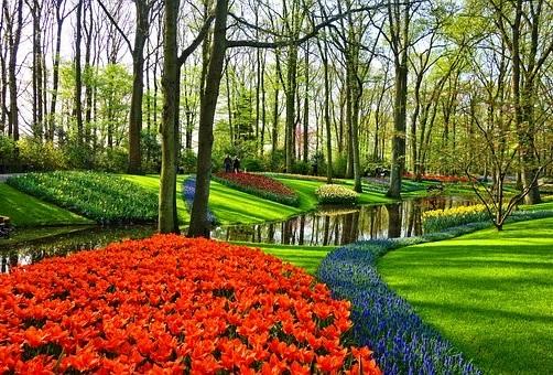 Strojová výsadba květinových cibulovin podél silnic - Verver Export Miroslav u Znojma