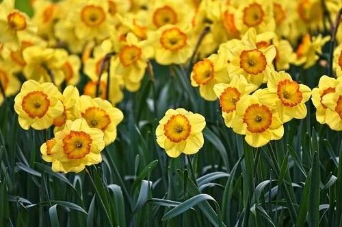 Podzimní a letní směsi květinových cibulovin - Verver Export Znojmo