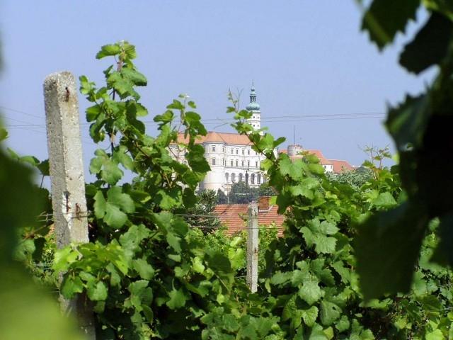 Ubytování ve vinařství v Mikulově, VÍNO LÍPA s.r.o.