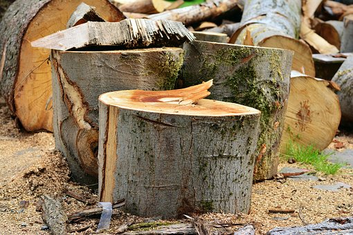 Těžba a zpracování dřeva v Pohořelicích na jižní Moravě