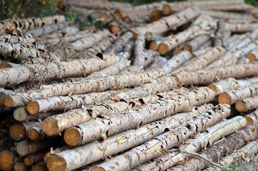 Těžba a výkup dřeva, zpracování dřeva na topení