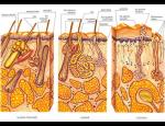 Dermatovenerologické centrum, dermatologie, kryoterapie, kryostimulace, moderní způsoby léčby