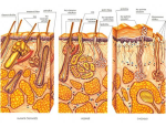 Dermatovenerologick� centrum, dermatologie, kryoterapie, kryostimulace, modern� zp�soby l��by