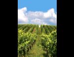 Víno Lípa Mikulov - produkce prvotřídních vín z vlastních vinic