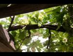 Kvalitní přívlastková vína z rodinného vinařství Víno Šimák v Mikulově