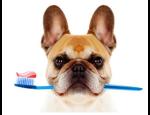 Stomatologická ordinace veterinární nemocnice v Opavě – zákroky v inahalční anestezii