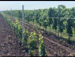 Drátěné konstrukce do vinohradů
