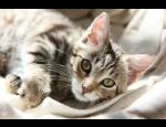 Speciální ordinace pro kočky na Veterinární klinice Palackého v Opavě