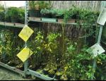 Ovocné a okrasné stromy a keře, skalničky, letničky, byliny v zahradnictví ve Znojmě