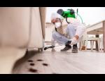 Dezinfekce, dezinsekce, deratizace – odborné služby v Zlínském kraji