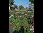 Bohatý výběr zahradnického sortimentu, návrhy a úpravy zahrad